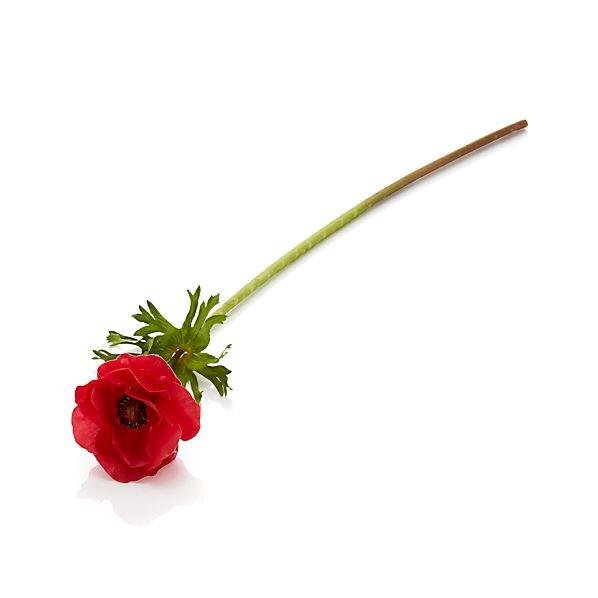 Anemone Red Stem