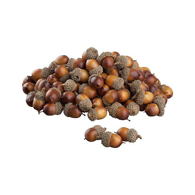 Oak Tree Acorns