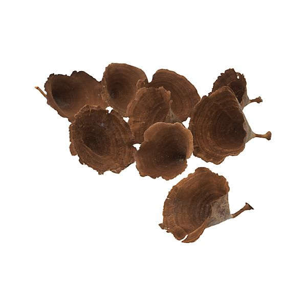 Set of 9 Calice Mushrooms