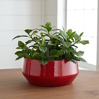 Cormick Red Planter