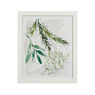 Culinary Herbs No. 2 Print