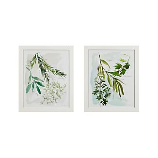 Culinary Herbs Prints Set of 2