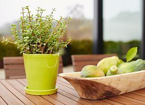 Festive Small Kiwi Planter