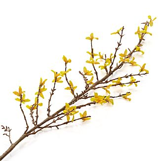 Prolong the cheery sight of springtime's first blooms with this realistic recreation of a budding forsythia branch, full of bell-shaped yellow flowers.