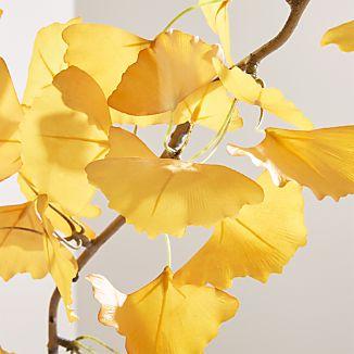 Yellow Ginkgo Stem Branch