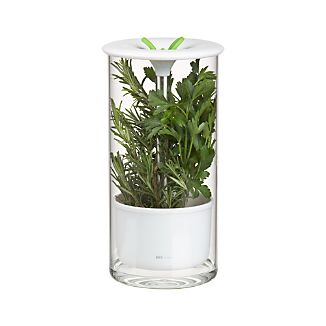 Glass Herb Keeper