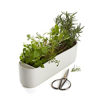 Matte white ceramic white oval nurtures windowsill herbs with a dedicated slot for accompanying scissors.