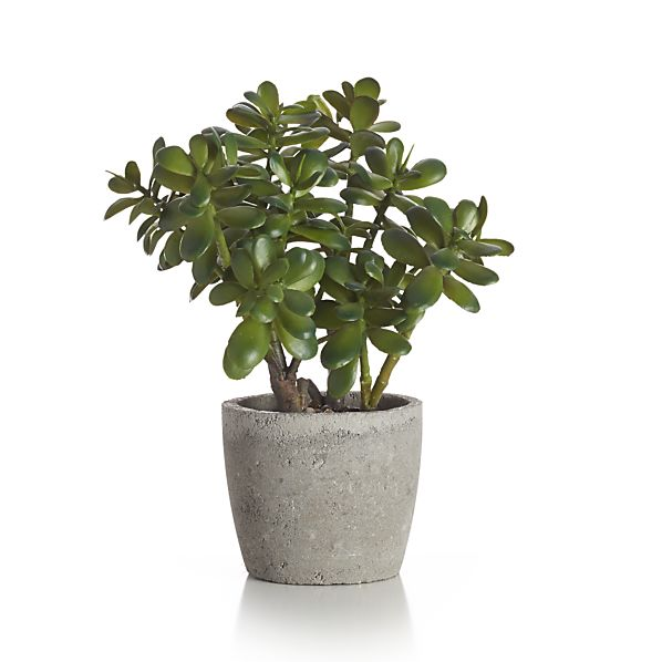 Potted Artificial Jade Plant In Botanicals Amp Plants
