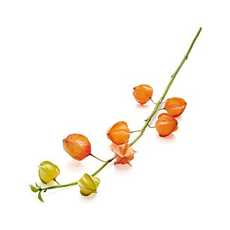 Japanese Lantern Artificial Flower Stem