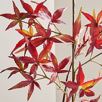 Add fall color that never fades to dried botanical arrangement with our lifelike Japanese maple stem. Replicating the delicate leaf shapes and rich color of Japanese maple leaves, the stem displays beautifully in multiples in a tall vase. Try mixing in real blooms to add a bit of autumnal color to floral arrangements.