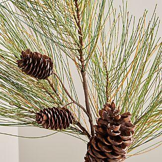 Long Needle Pine Spray