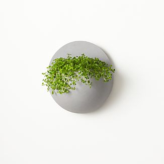 Luna Wall Planter