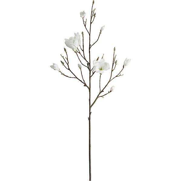 MagnoliaBranchS2AV1S13