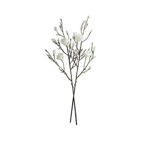 MagnoliaBranchS2S13