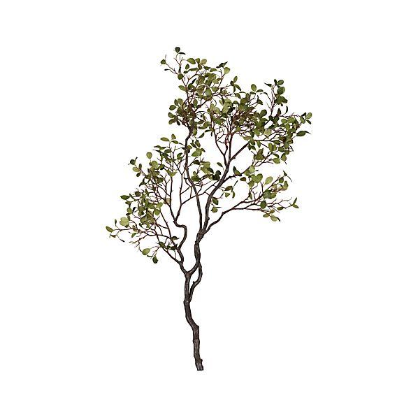 Manzanita Branch with Leaves