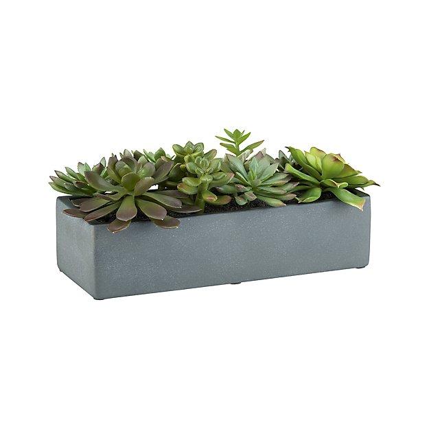artificial succulents in a pot crate and barrel. Black Bedroom Furniture Sets. Home Design Ideas