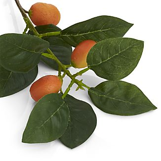 Orange Fruit Stem
