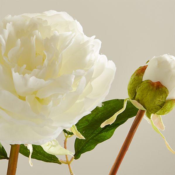 White Peony Flower Stem