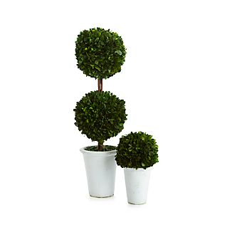 Boxwood greens add an elegant, classic touch to home décor. Bringing fresh greenery to the mantle or entryway without the upkeep, boxwood greens come in a white pot.Boxwood greensClay potFor indoor use onlyKeep away from direct sunlight and damp environmentsKeeps fresh for up to 2 yearsMade in China