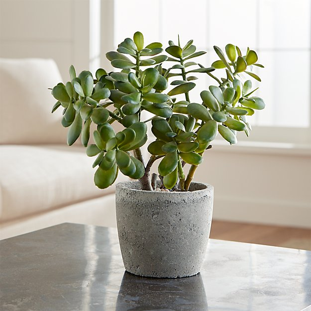 Potted Artificial Jade Plant Crate And Barrel