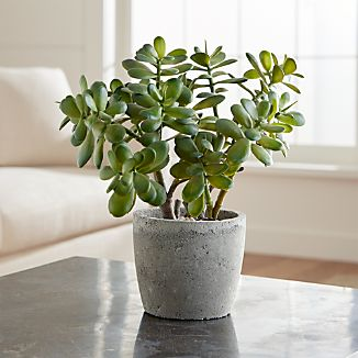 The sculptural beauty of lustrous succulent plants is realistically handcrafted for year-round use. Each faux plant is potted in a concrete pot.