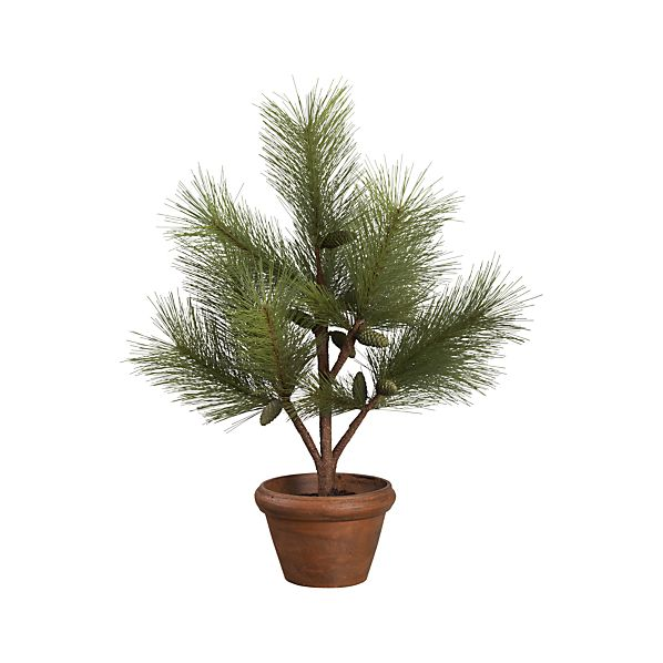 Potted Pine Tree