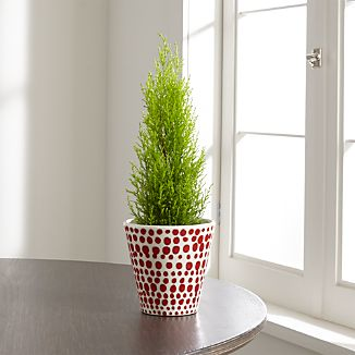 Red Dot Planter