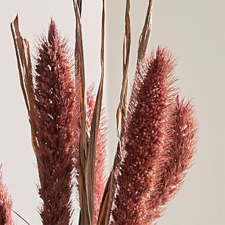 Dropped in a vase or incorporated into a Thanksgiving centerpiece, the bristly spikelets and grassy leaves of dried setaria stems bring lend a natural note to fall décor.