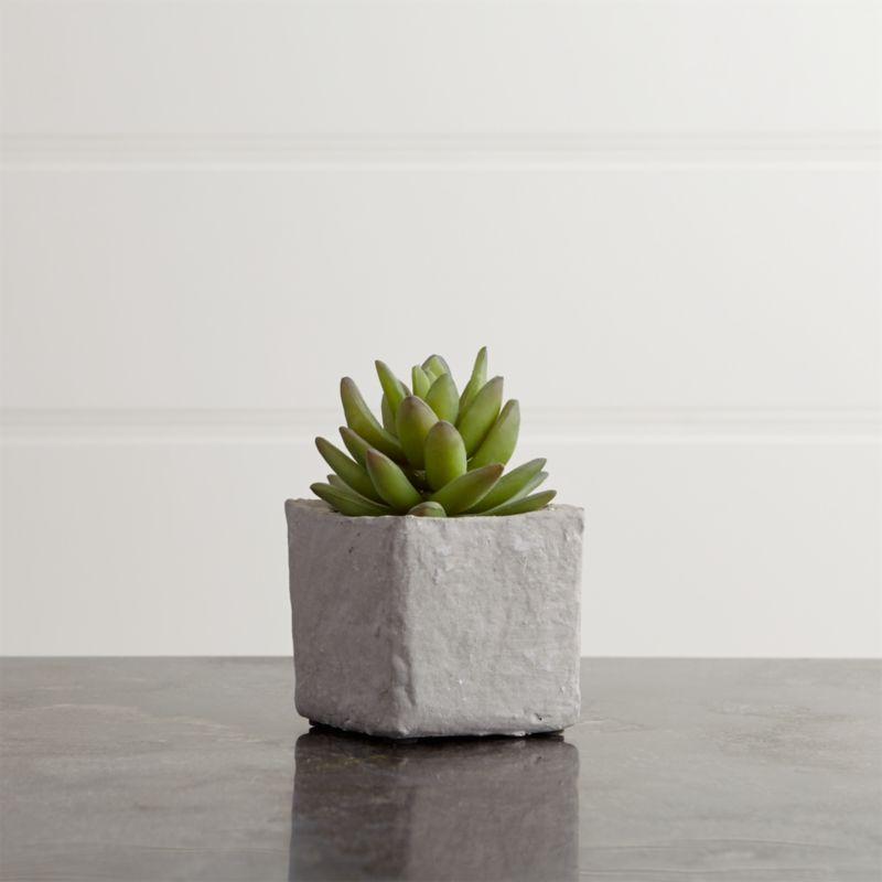 Potted Medium Succulent