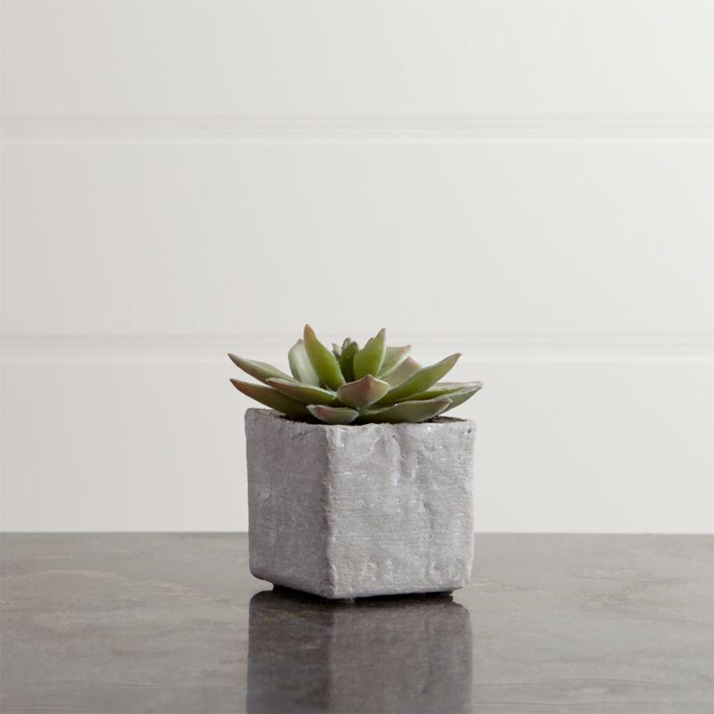 Potted Short Succulent