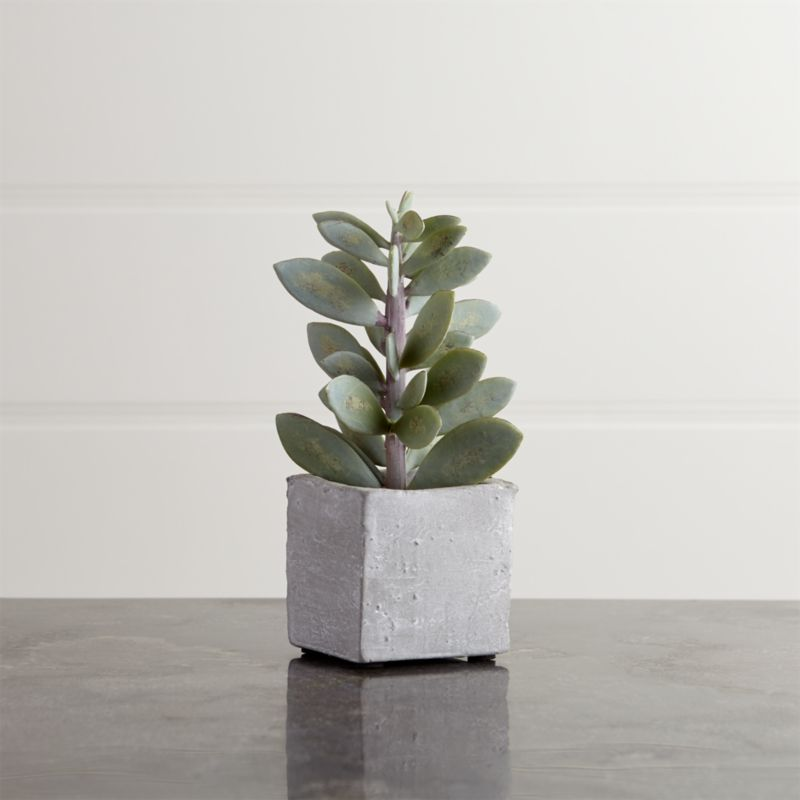 Potted Tall Succulent