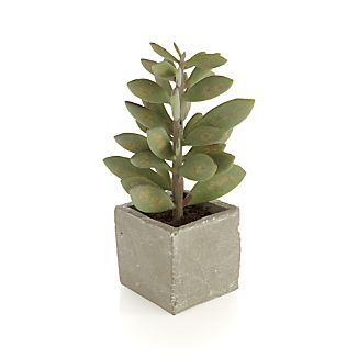 Potted Artificial Tall Succulent