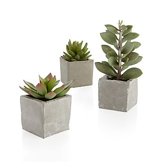 The sculptural beauty of lustrous succulent plants is realistically handcrafted for year-round use. Each faux plant is potted in a rustically finished square cement pot.