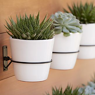 Clean, black hook fastens onto interior or exterior walls to showcase the brilliant colors of our small Festive planters.