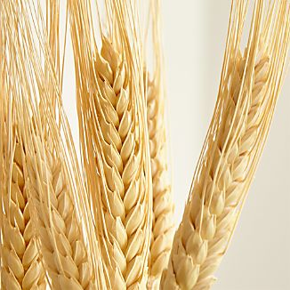 A symbol of fall's bounty, natural dried wheat stalks are bundled with twine to create an organic bouquet. Stems can be cut down to fit desired size.