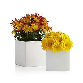 White Square Planter/Vases
