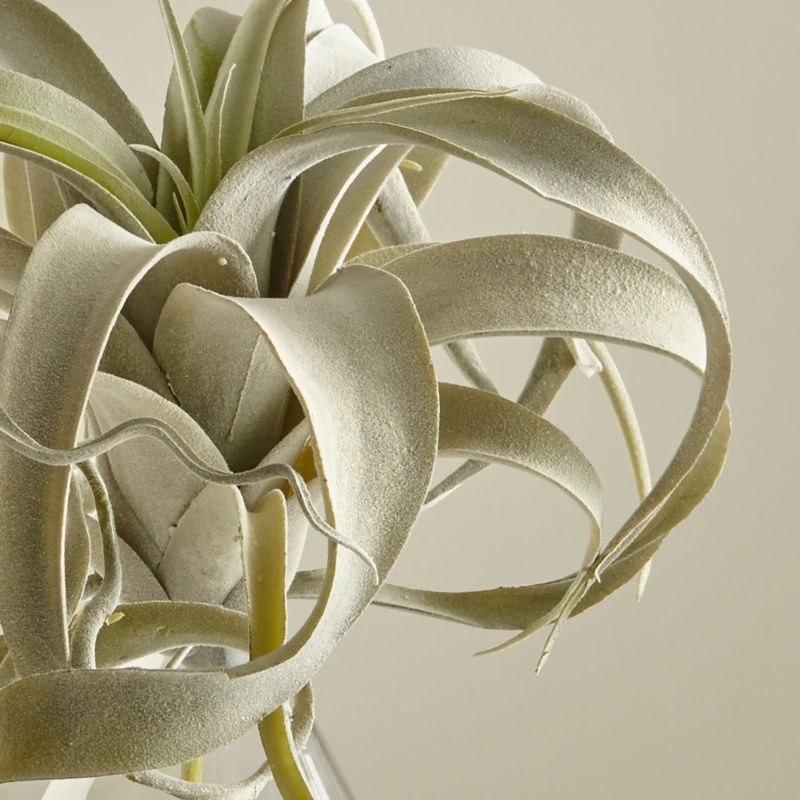 Faux Air Plant Reviews Crate And Barrel
