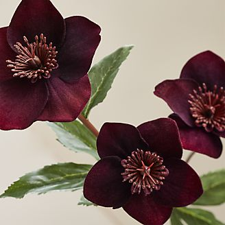 Silk flowers and artificial plants crate and barrel black mauve poppy stem mightylinksfo