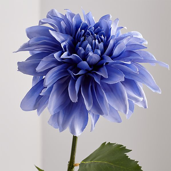 Blue Dahlia Flower Stem Reviews Crate And Barrel