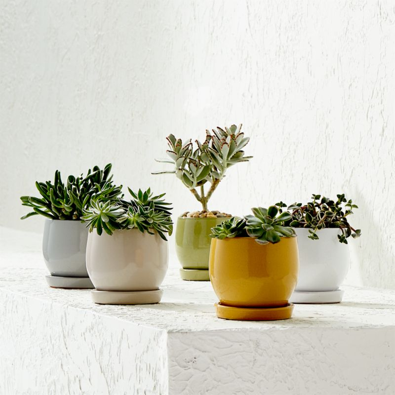 Campana Mini Planters And Saucers