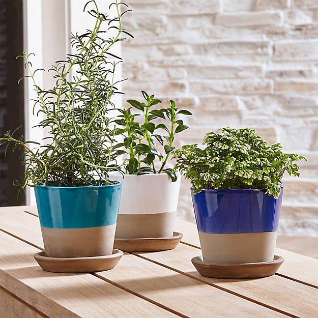 Carnivale Mini Planters