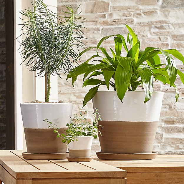 Carnivale White Planters | Crate and Barrel