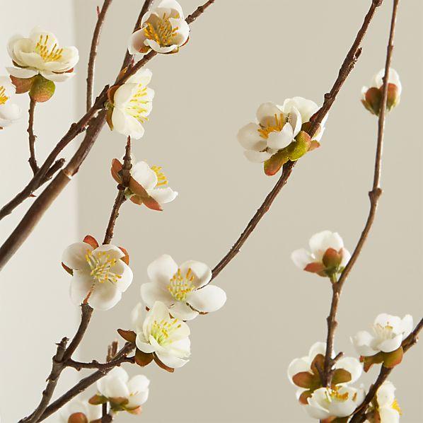 CherryBlossomWhiteSHS17