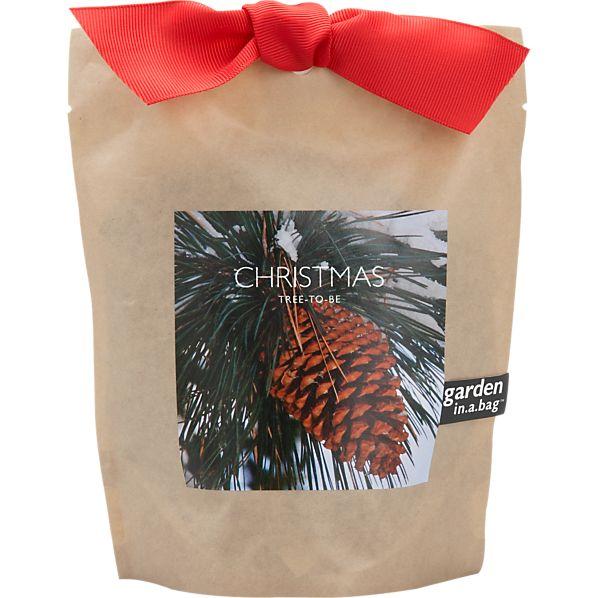 Christmas Tree-to-Be