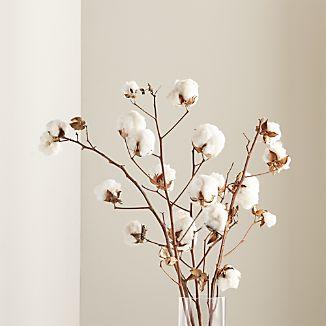Cotton Stem Bunch