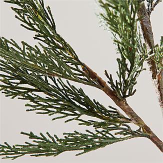 Cypress Stem