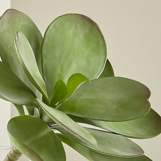 Dusty Paddle Artificial Kalanchoe - Image 1 of 9