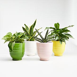 Elba Planters