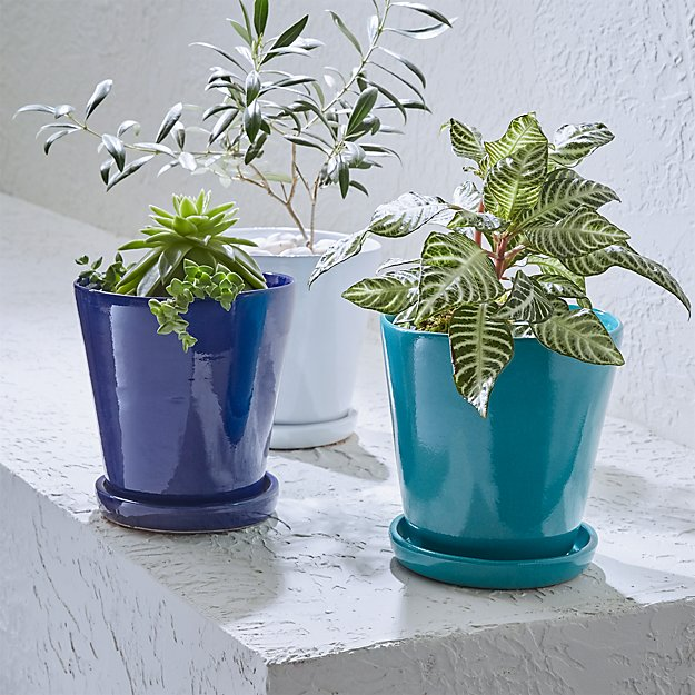 Festive Small Planters and Saucers | Crate and Barrel