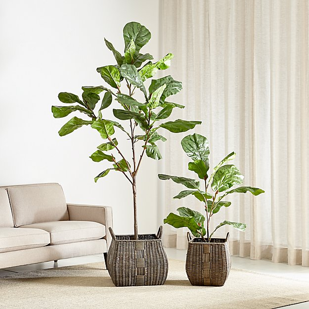 Faux Fiddle Leaf Fig Trees Crate And Barrel